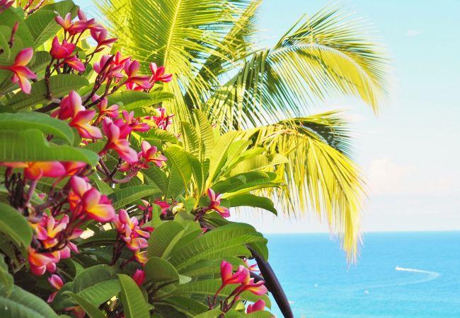 superbe jardin tropical de la villa champagne à la réunion
