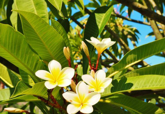 hébergement de vacances à Boucan Canot à la Réunion