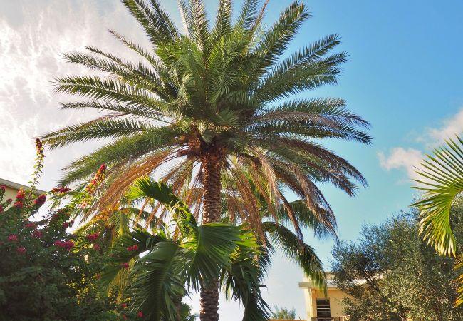 Palmier phoenix dans la location de la villa Mademoiselle