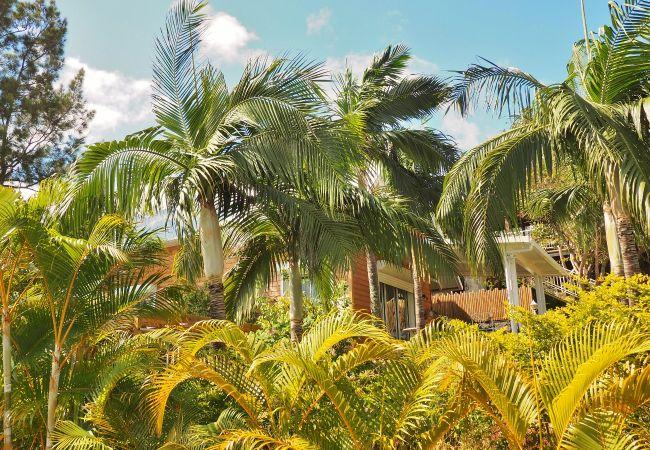 Vacances à la Réunion dans une maison ou villa