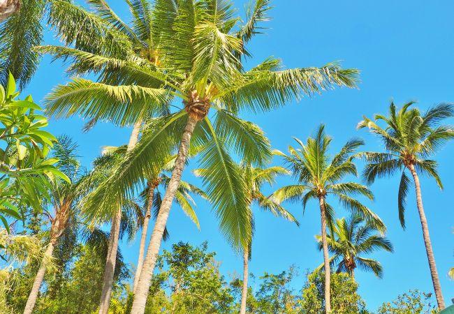 Villa de rêve pour des vacances à la Réunion