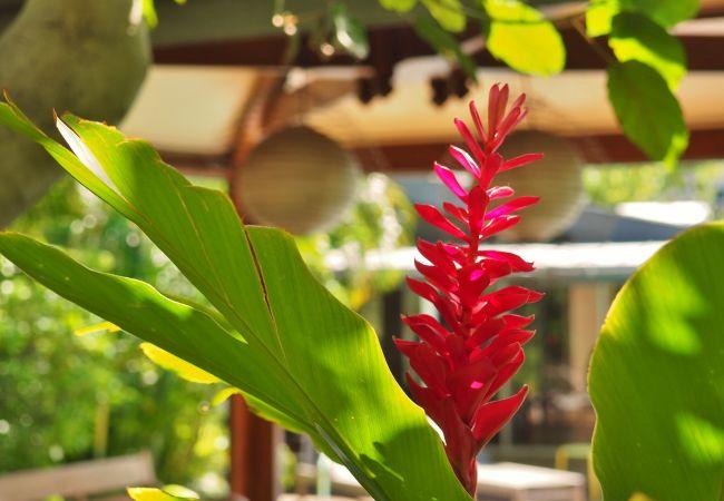 Tropical Home Réunion
